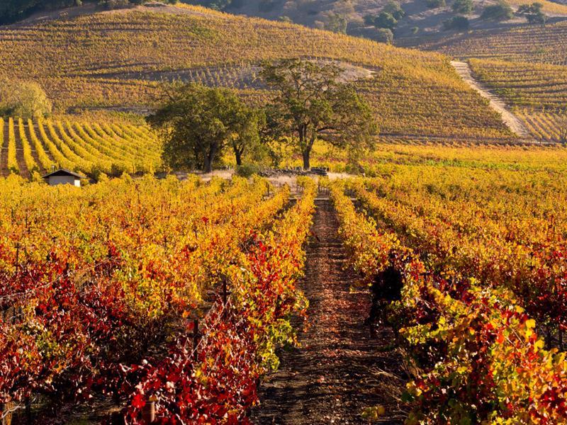 Thung lũng Napa, California (Mỹ): Còn gì tuyệt vời hơn khi được thưởng thức rượu nho trong một không gian thơ mộng.