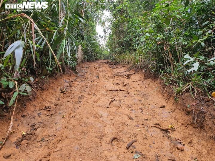 Con đường dẫn vào công trường đốn gỗ của lâm tặc.