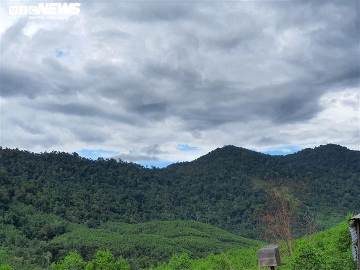 Lợi dụng thời điểm dịch COVID-19 diễn biến phức tạp, lâm tặc ngang nhiên đốn hạ, xẻ hộp cây gỗ ngay tại khu vực rừng thuộc lâm phần xã Ea Lai, huyện M'Drắk, tỉnh Đắk Lắk, sau đó vận chuyển ra ngoài.