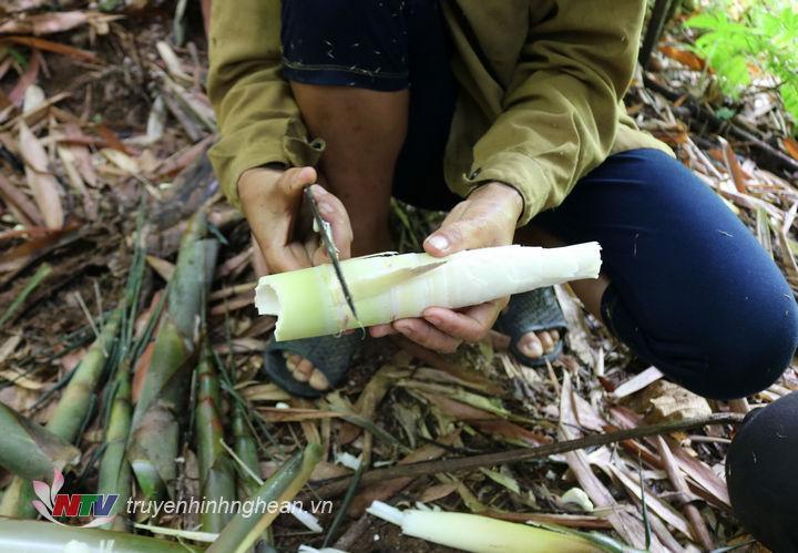 Măng rừng ở Anh Sơn chủ yếu là măng tre, măng nứa, măng mét .