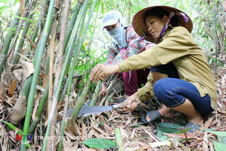 Phụ nữ Anh Sơn gác lại công việc đồng áng tranh thủ lên rừng hái măng,