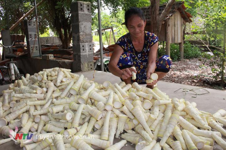Măng rừng mang lại thu nhập đáng kể cho người dân Anh Sơn.