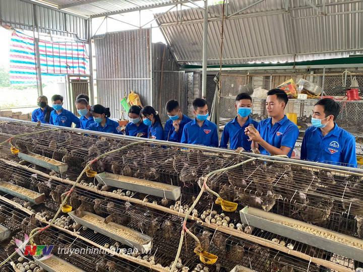 Đoàn viên thanh niên học tập kinh nghiệm tại trang trại.