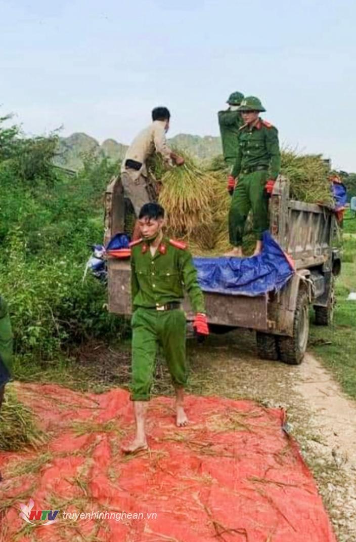 Lúa được vận chuyển về tận nhà cho người dân.
