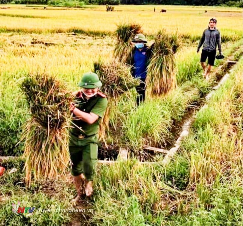 """Cán bộ chiến sỹ công an hỗ trọ người dân gặt lúa """"chạy bão""""."""