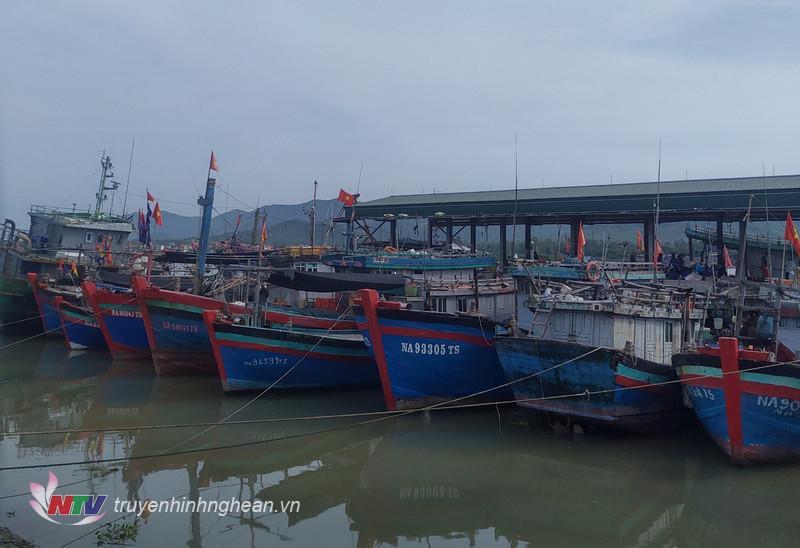 ác tàu thuyền neo đậu tại cảng Quỳnh Phương