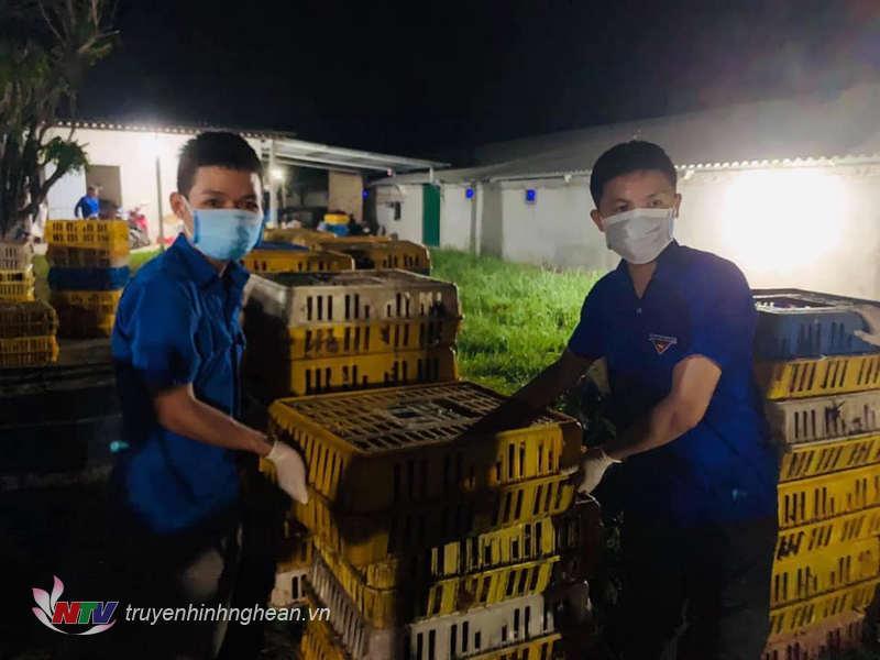 9.000 con gà được đoàn viên thanh niên hỗ trợ