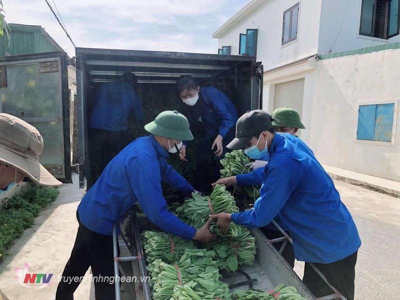 Rau xanh được vận chuyển đến các doanh nghiệp, đơn vị, người dân thu mua