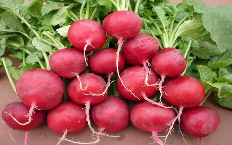 Củ cải đường được biết đến như một loại rau rất có hiệu quả trong cuộc chiến chống bệnh thiếu máu. Loại củ này có hàm lượng sắt cao, giúp sửa chữa và kích hoạt lại các tế bào hồng cầu, ngăn ngừa thiếu máu.