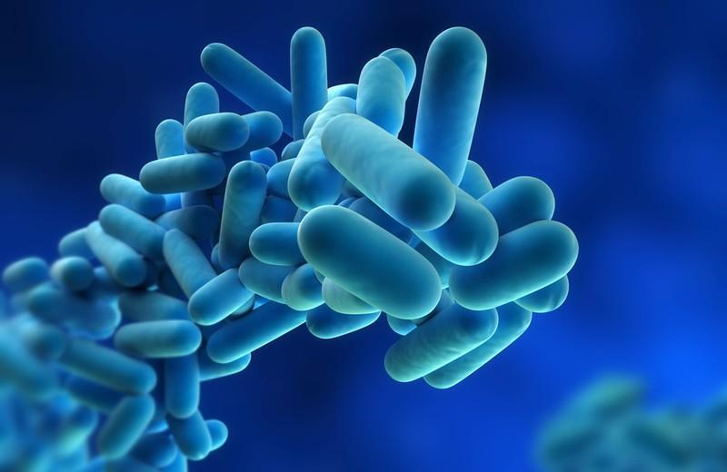 Bệnh Legionnaires: Đây là một dạng viêm phổi do Legionella gây ra. Vi khuẩn này có trong các môi trường nước ngọt tự nhiên như ao, hồ, suối,... Người bệnh nhiễm khuẩn khi hít phải hơi nước có chứa vi khuẩn này.