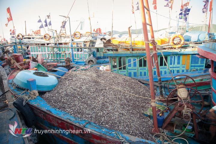 Các tàu cập cảng Quỳnh Phương đang xếp hàng chờ bốc dỡ.