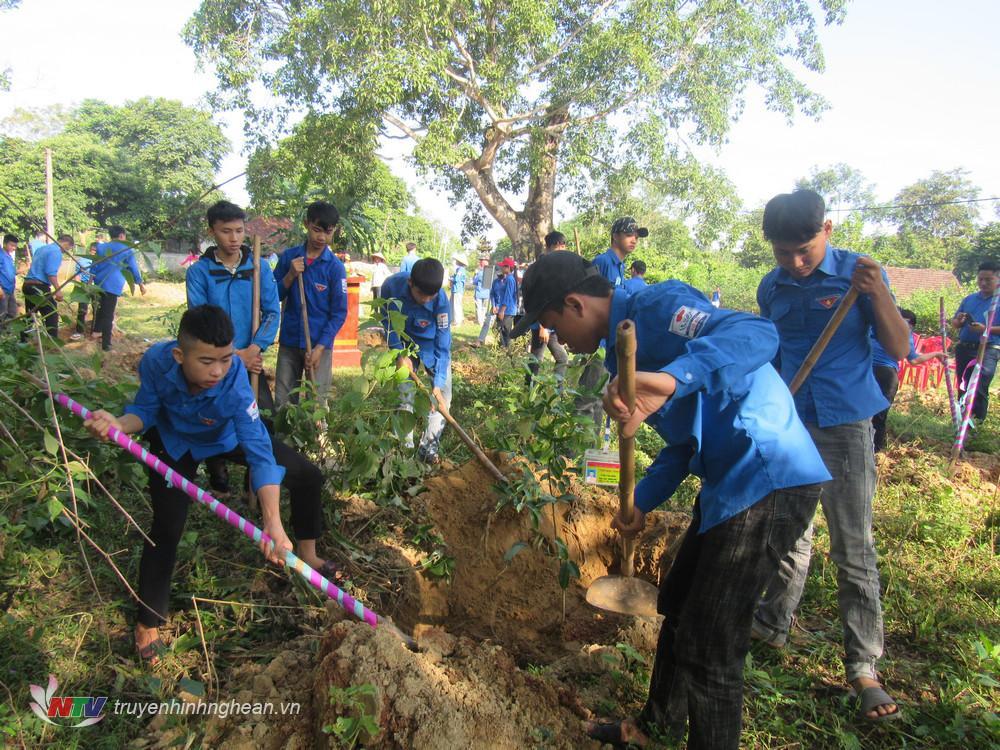 ĐVTN tham gia trồng cây