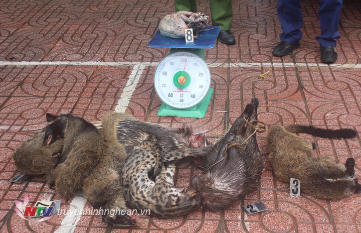 Các cá thể đều là động vật quý hiếm được quy định bảo vệ.