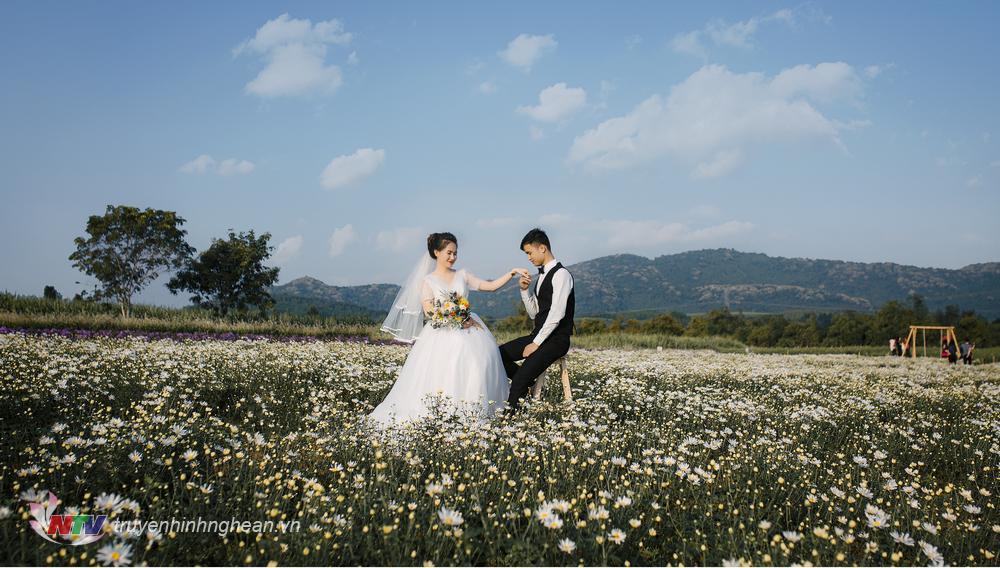 Nhiều cặp đôi chọn làm địa điểm chụp ảnh cưới.