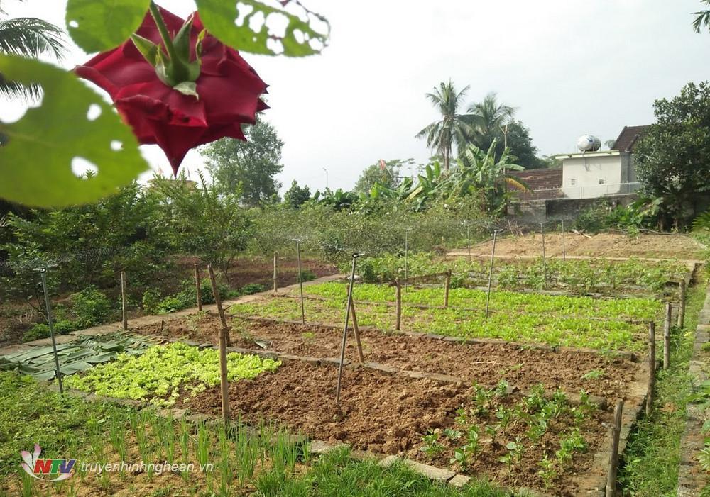 3.Một khu vườn mẫu tại xã Hòa Sơn được quy hoạch có lối đi lại thuận tiện, trồng theo hàng, lối rất sạch sẽ, đẹp mắt