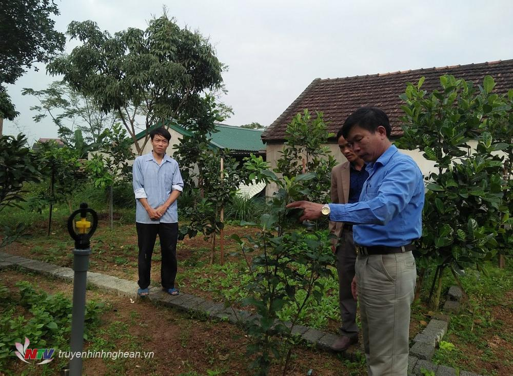 5.Lãnh đạo xã Thái Sơn đang kiểm tra mô hình vườn mẫu tại các hộ gia đình đăng ký
