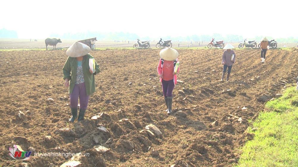 Huyện Nghĩa Đàn khuyến cáo nông dân tùy vào đặc điểm cụ thể của địa phương àm sử dụng các giống ngô hợp lý.